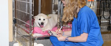 Image: Our technicians are so dedicated to patient care and keeping your pets comfortable during their stay.