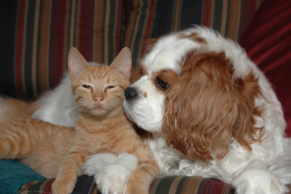 Cat-Dog Buddies