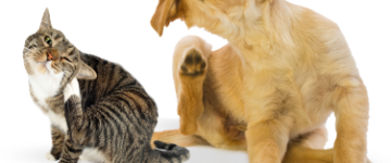 scratching dog and cat